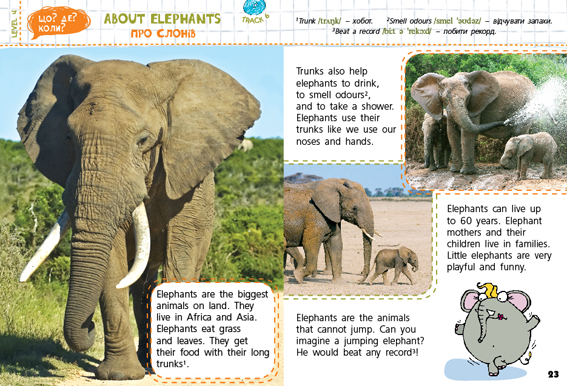 About Elephants