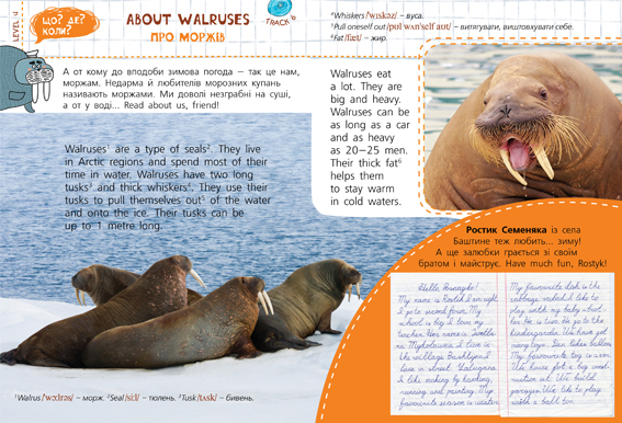 About Walruses